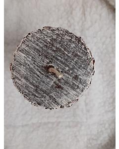 Küünal Mänd / K10,5cm LM